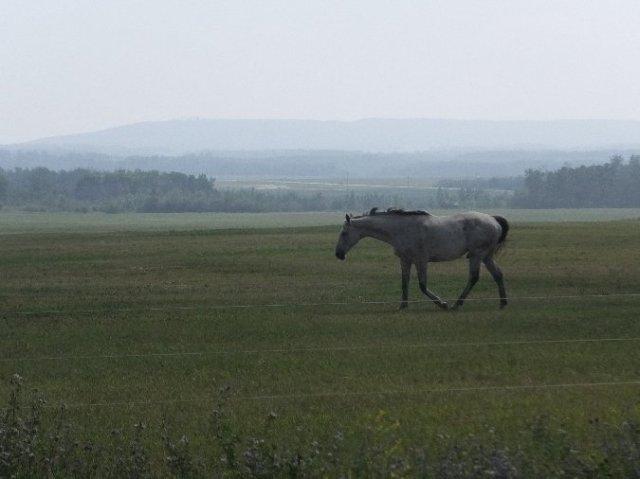 smokehorse